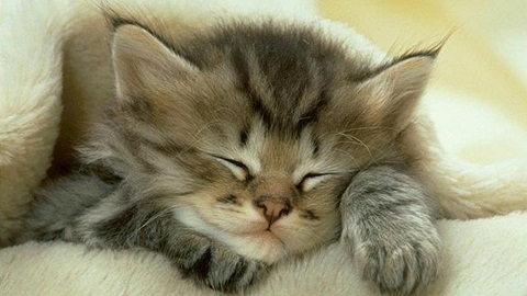 katt-sover